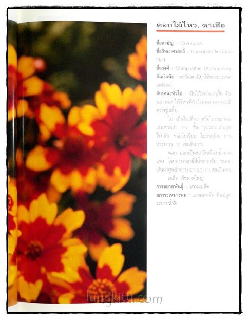 ไม้ดอกแสนสวย : ไม้ดอกไม้ประดับ 7