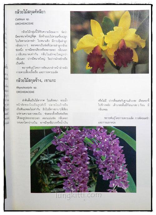 ไม้ดอกไม้ประดับ 8