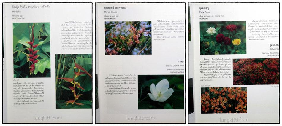 ไม้ดอกไม้ประดับ 7