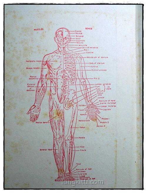 กายวิภาคศาสตร์และสรีรวิทยา 1