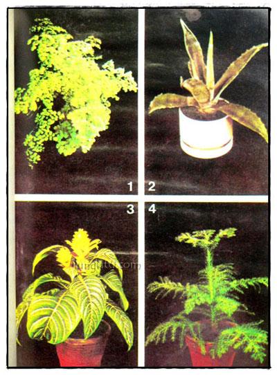 พันธ์ไม้ในบ้าน และ การประดับตกแต่ง (เล่ม 1,2, 3, 4, 7, 8,) รวม 6 เล่ม 5