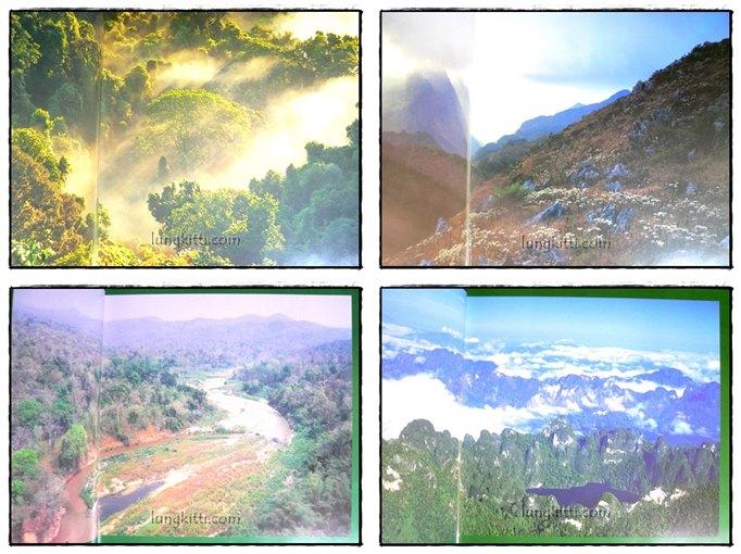 ป่ามรดกไทย อาณาจักรพรรพืชและสรรพชีวิตแห่งป่าเขตร้อน 3