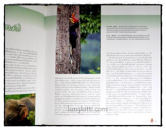 ป่ามรดกไทย อาณาจักรพรรพืชและสรรพชีวิตแห่งป่าเขตร้อน 4