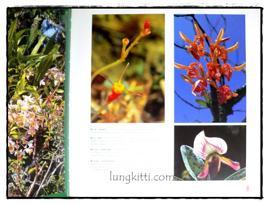 ป่ามรดกไทย อาณาจักรพรรพืชและสรรพชีวิตแห่งป่าเขตร้อน 5