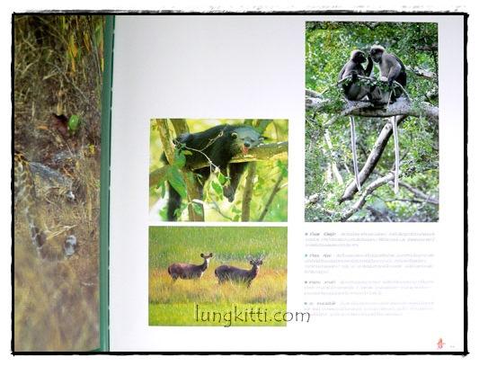 ป่ามรดกไทย อาณาจักรพรรพืชและสรรพชีวิตแห่งป่าเขตร้อน 6