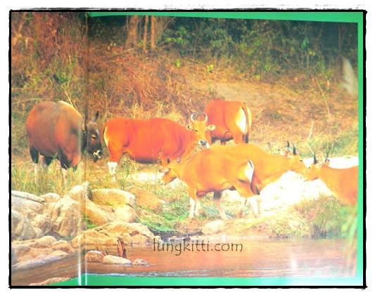 ป่ามรดกไทย อาณาจักรพรรพืชและสรรพชีวิตแห่งป่าเขตร้อน 7