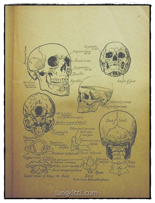 กายวิภาค ฉบับนักศึกษาศิลปะ / บุญเลิศ บุตรขาว 3