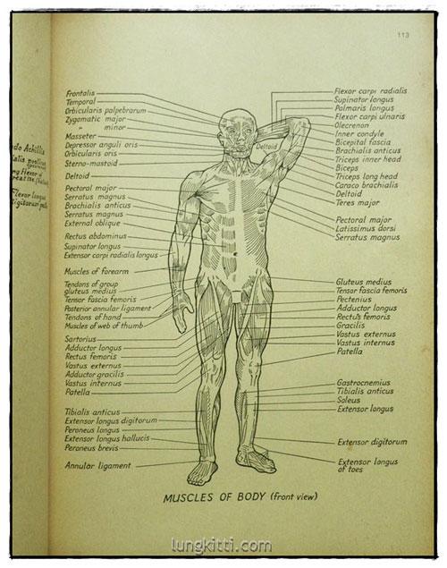 กายวิภาค ฉบับนักศึกษาศิลปะ / บุญเลิศ บุตรขาว 6