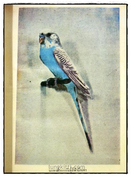 ตำราเลี้ยงผสมพันธุ์ – ฝึก นกหงส์หยก 4