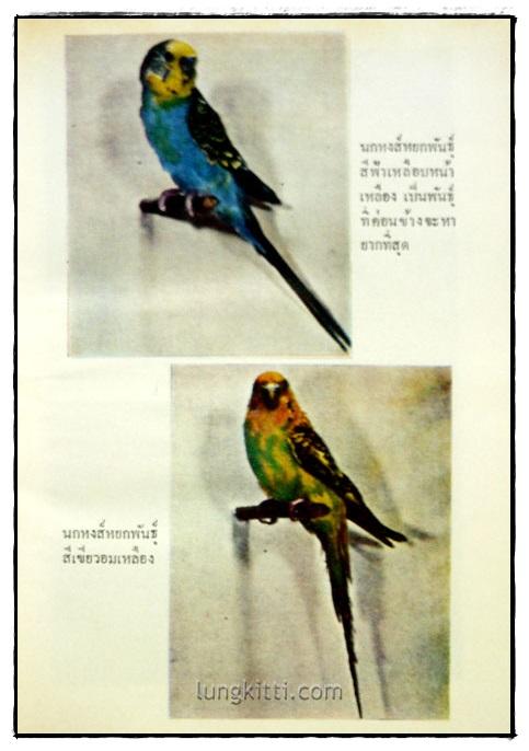 ตำราเลี้ยงผสมพันธุ์ – ฝึก นกหงส์หยก 5