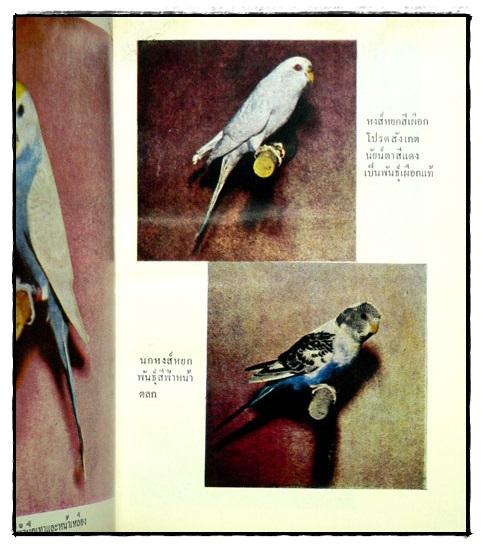 ตำราเลี้ยงผสมพันธุ์ – ฝึก นกหงส์หยก 6