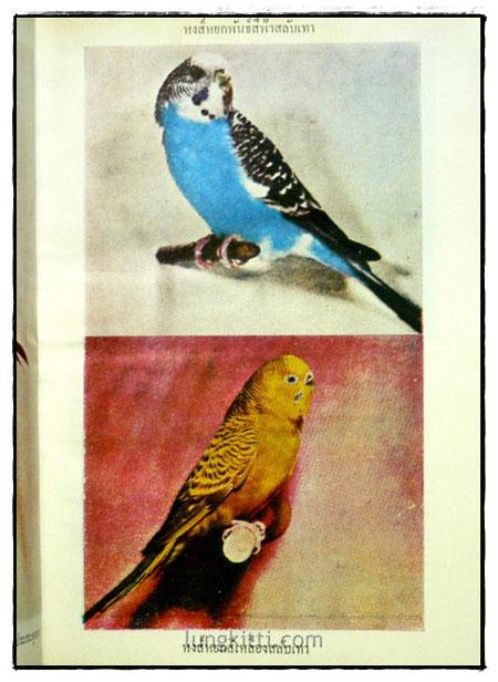 ตำราเลี้ยงผสมพันธุ์ – ฝึก นกหงส์หยก 7