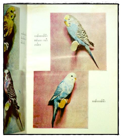 ตำราเลี้ยงผสมพันธุ์ – ฝึก นกหงส์หยก 8
