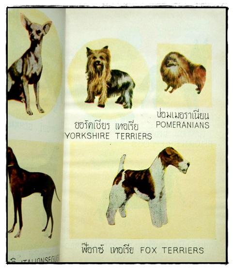 ตำราเลี้ยงสุนัข และ วิธีรักษาโรค / หลวงสำราญเกษตรพันธุ์ 7
