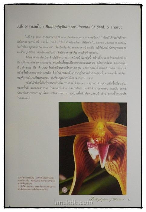 กล้วยไม้สิงโตกลอกตาในประเทศไทย / สลิล สิทธิสัจจธรรม 6