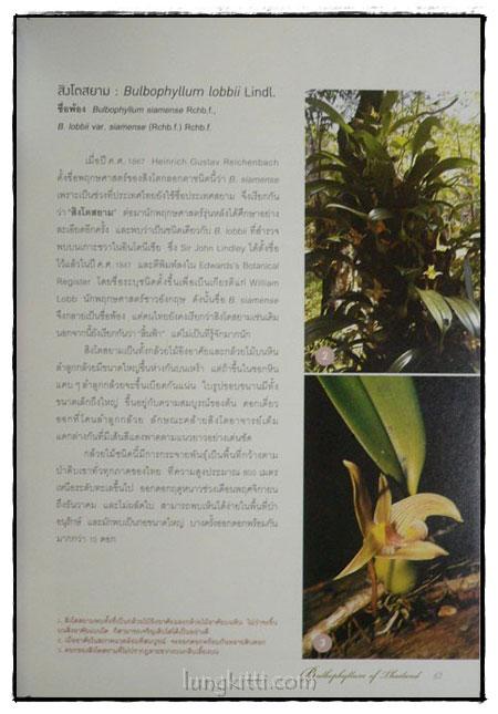 กล้วยไม้สิงโตกลอกตาในประเทศไทย / สลิล สิทธิสัจจธรรม 7