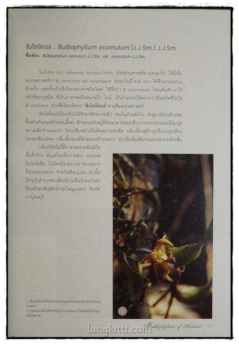 กล้วยไม้สิงโตกลอกตาในประเทศไทย / สลิล สิทธิสัจจธรรม 8