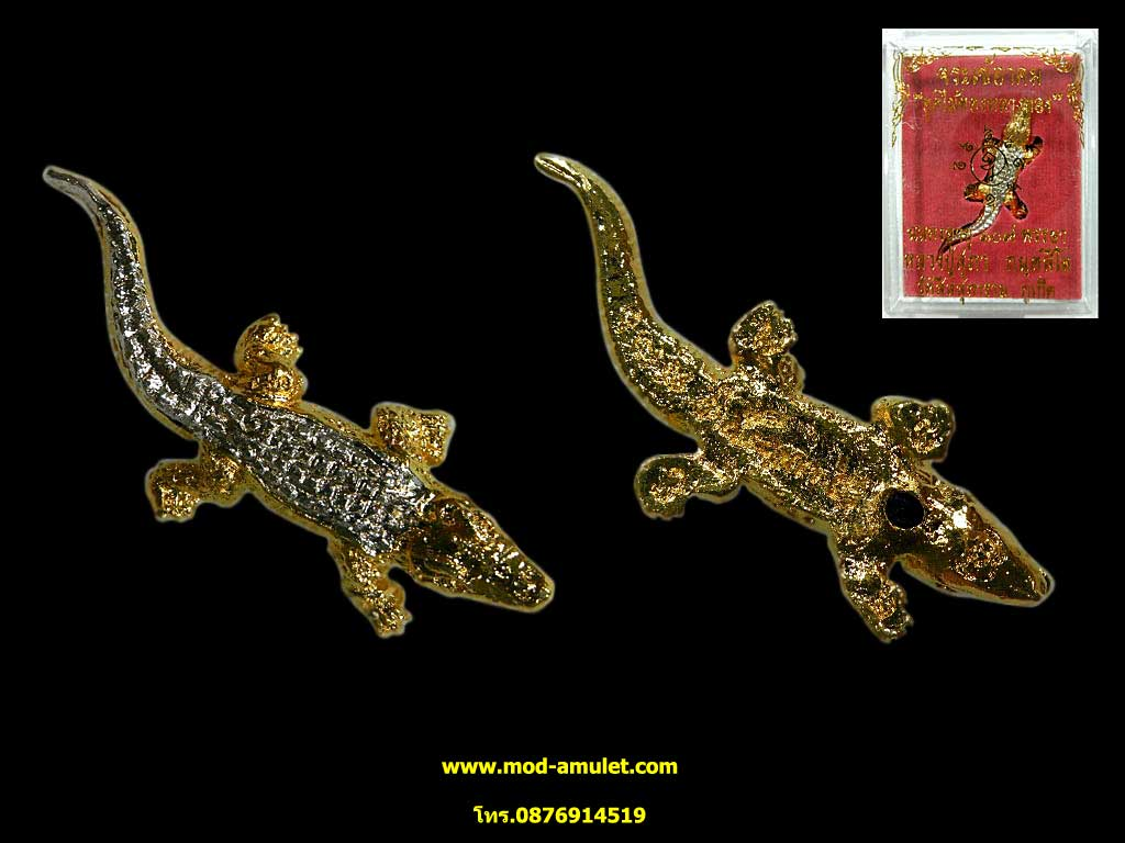 จระเข้อาคมอุดไม้ทองหลางทอง รุ่นแรก หลวงปู่สุภา กันตสีโล (1)