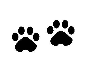 โลชั่นกันลื่นสำหรับสุนัขและแมว (out of stock)