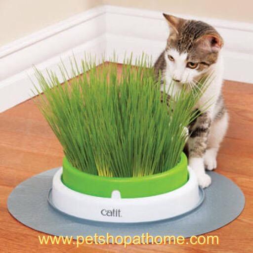 ชุดปลูกหญ้าสำหรับแมว - Grass Planter