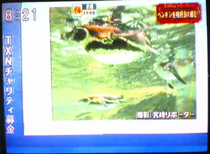 ดูทีวีญี่ปุ่นสดๆ 50ช่อง ทั้งบ้านพักและอพาร์ทเม้นทร์ 16