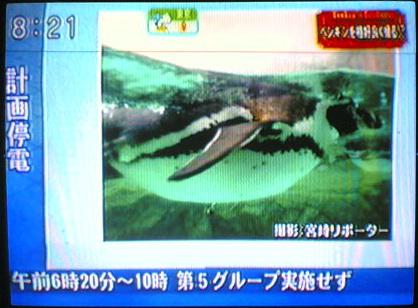 ดูทีวีญี่ปุ่นสดๆ 50ช่อง ทั้งบ้านพักและอพาร์ทเม้นทร์ 17