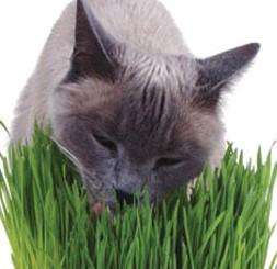 CAT Herbs MIX เมล็ดสมุนไพรแมว รวมกว่า 8 ชนิด แมวชื่นชอบ ดีต่อสุขภาพ ป้องกัน Hairball USA (1 แถม 1 )