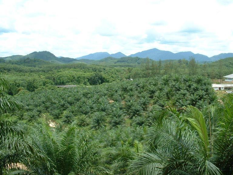 จ.พังงา อ.ท้ายเหมือง ฉ.31-3-60ไร่ Palm Land beautiful view close to Khao Lak