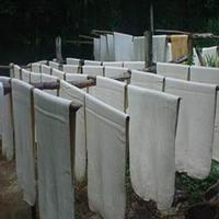การปลูกพืชแซมยางพารา