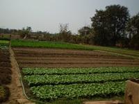 ทำไมต้องเกษตรชีวภาพ