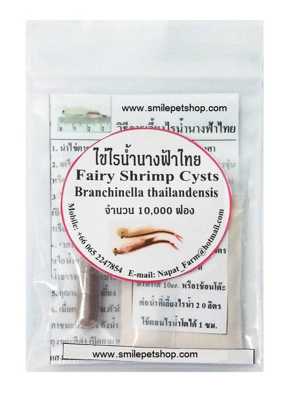 ไข่ไรน้ำนางฟ้าไทยบรรจุแคปซูล