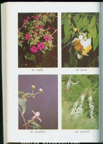 ดอกไม้ในวรรณคดี 2