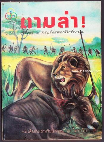 ตามล่า  (Lions on the Hunt)