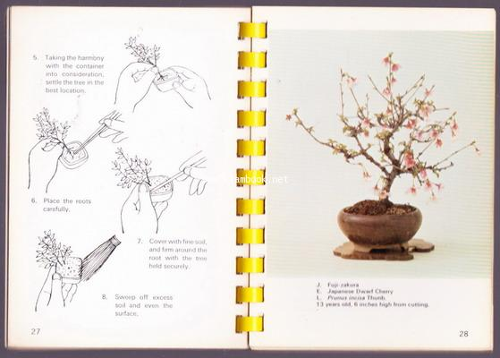 Bonsai Miniatures Quick  Easy (คู่มือบอนไซภาษาอังกฤษ) 1