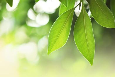 หัวน้ำหอม herbal green