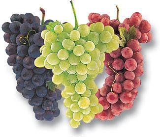 ผงสครับ grape