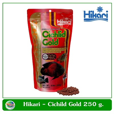 Hikari Cichlid Bio-Gold+ อาหารปลาหมอสี เร่งสี 250 g.