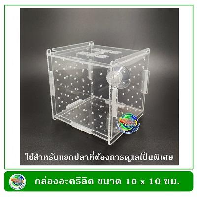 กล่องอคริลิคแยกเลี้ยงปลา กุ้ง ในตู้ปลาใหญ่ แบบจุกยาง ขนาด 1 ช่อง Acrylic Aquarium Fish Tank Box