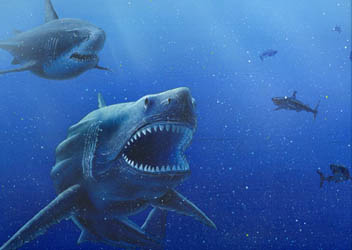 ฟอสซิลฟันปลาฉลามสายพันธ์โอทูดัสขนาดเล็ก (Small Fossil Shark\'s Tooth / Otodus) 5