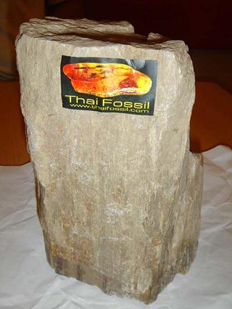ฟอสซิลไม้ (Wood Fossil) ใหญ๋ - Out of Stock