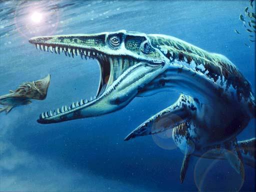 ฟอสซิลฟันไดโนเสาร์ขนาดเล็ก (Small Dinosaur Tooth/Mosasaurus Tooth) 5