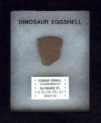 เปลือกไขไดโนเสาร์ (Sauropod Dinosaur Egg Shell) สินค้าหมดชั่วคราว! 2