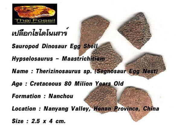 เปลือกไขไดโนเสาร์ (Sauropod Dinosaur Egg Shell) สินค้าหมดชั่วคราว! 4