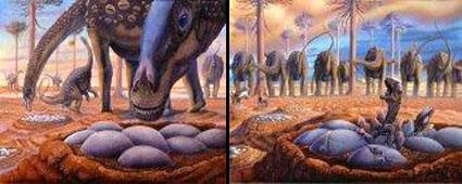 ไขไดโนเสาร์ (Sauropod Dinosaur Egg) สัตว์กินพืช 6