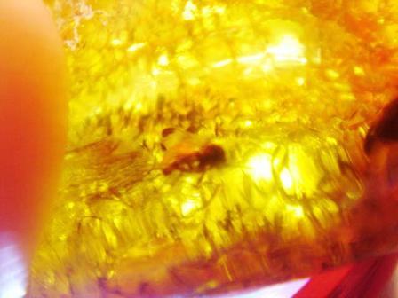 แมลงในก้อนอำพัน (FOSSIL INSECT INCLUSION) - Series 7 4