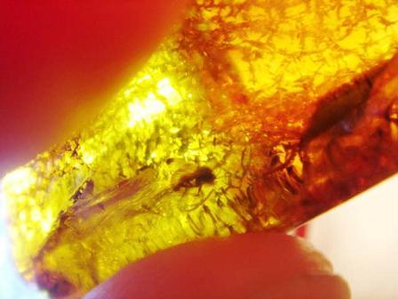 แมลงในก้อนอำพัน (FOSSIL INSECT INCLUSION) - Series 7 3
