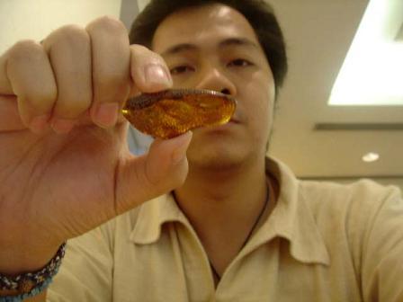 แมลงในก้อนอำพัน (FOSSIL INSECT INCLUSION) - Series 7 7
