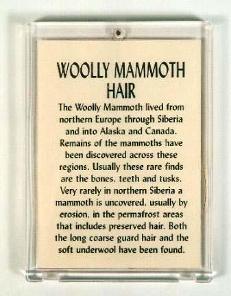 เส้นขนช้างแมมมอธโบราณ (woolly mammoth hair) 1