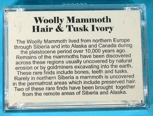 เส้นขนและชิ้นงาช้างแมมมอธโบราณ (Woolly Mammoth Hair  Tusk Ivory) 1