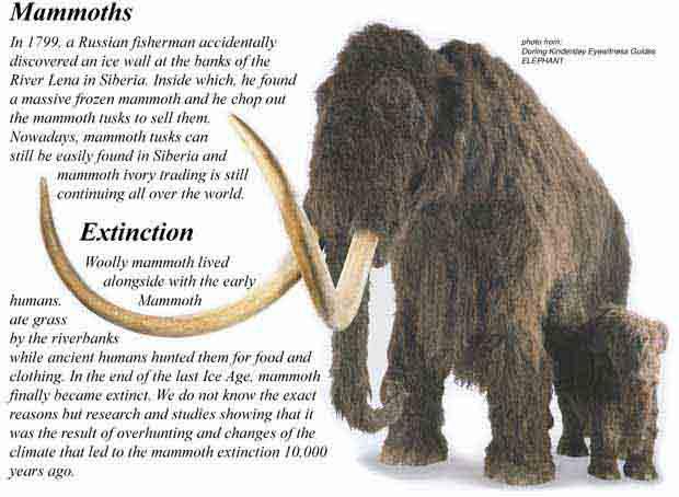 เส้นขนและชิ้นงาช้างแมมมอธโบราณ (Woolly Mammoth Hair  Tusk Ivory) 2